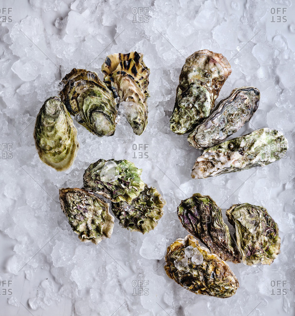 A dozen of raw oysters of different sizes and species with lemon wedges on ice cubes