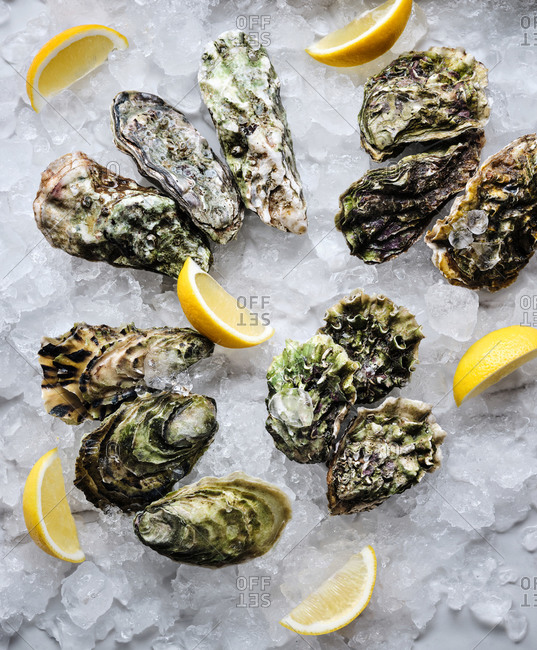 Fresh oysters of different species on crushed ice with lemon wedges