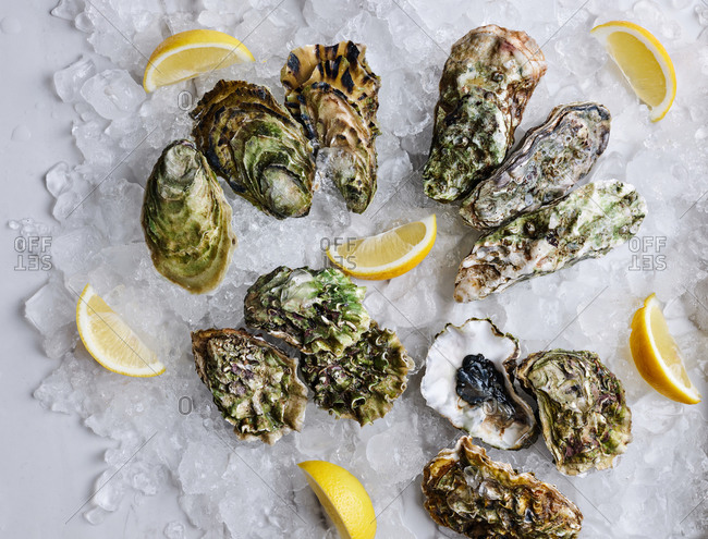 Selection of assorted delicious fresh oysters of different size and origin served on ice with lemons