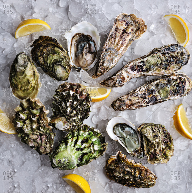 Dozen of oysters of various kinds and sizes served on ice with lemons