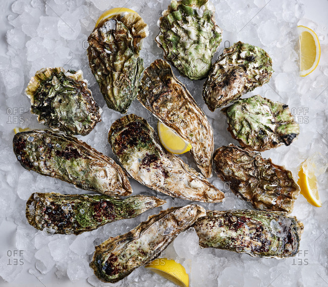 Top view of various species of fresh oysters on crushed ice