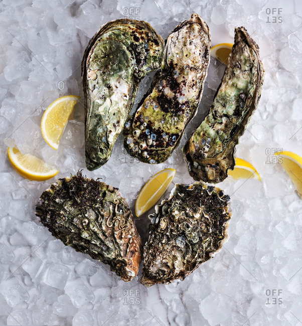 Top view of five big fresh oysters on ice cubes with lemon wedges