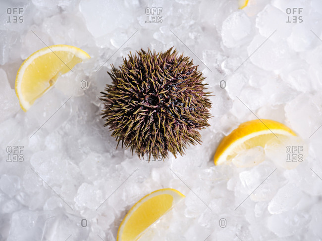 Raw sea urchin on crushed ice with lemon wedges