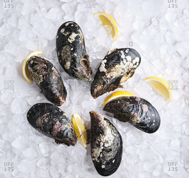 Six blue giant mussels on crushed ice with lemon wedges