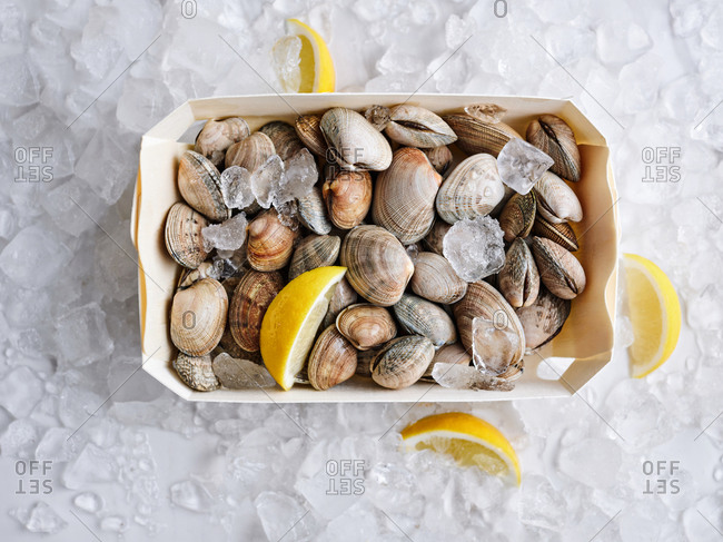 Beautifully displayed catch of littleneck clams with lemons on ice
