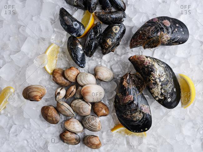 Assorted fresh seafood on display on crushed ice with lemons