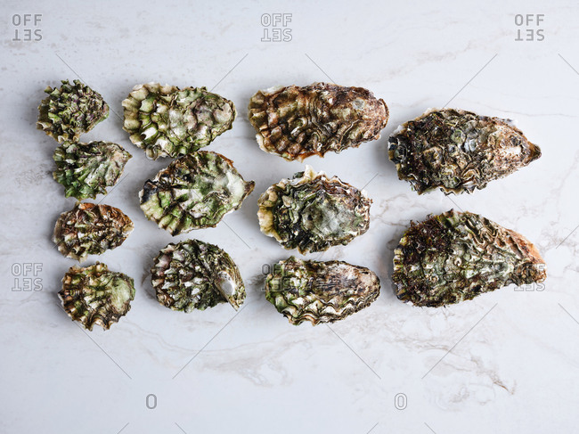 Dozen of oysters of various kinds and sizes served on light marble background
