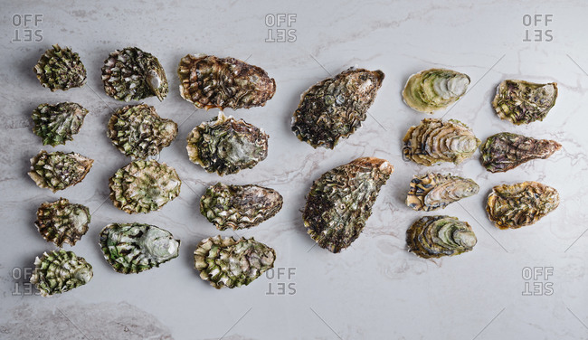 Raw oysters of different species, size and origin on light marble background