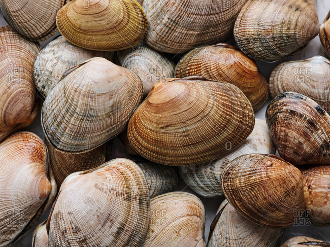 Close up view of pile of raw clams