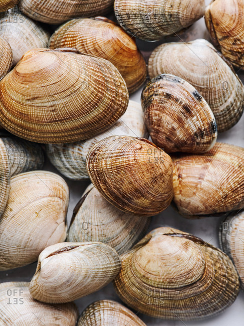 Top angle view of beautiful pile of freshly caught littleneck clams