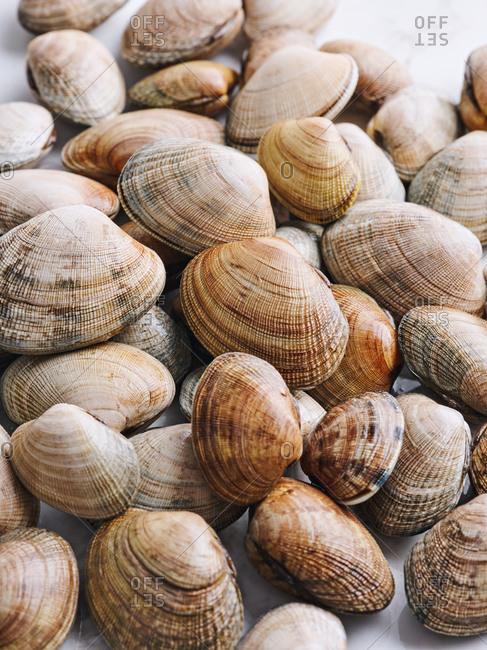 Pile of raw hard shelled clams on display at fish market