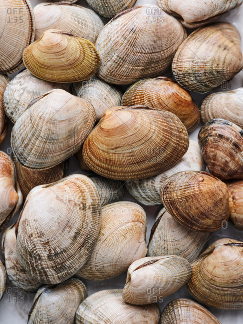 Close up of a pile of littleneck clams at seafood market