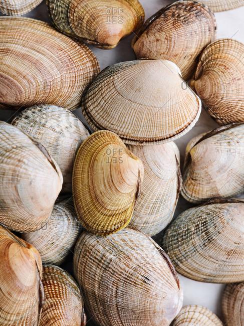 Vertical macro shot of littleneck raw clams