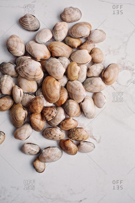 Freshly caught quahog clams on light marble background