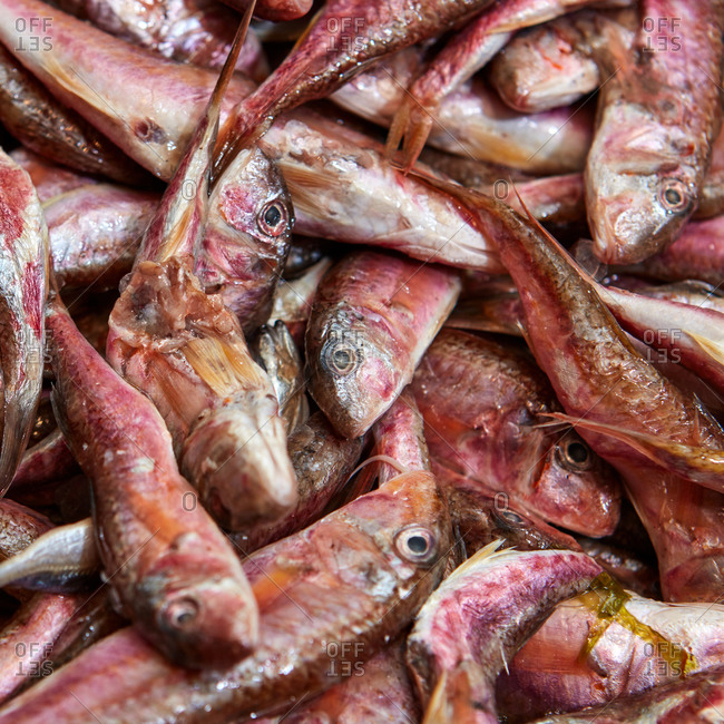 Fresh chilled red mullet fish for sale in a supermarket close-up. Concept of selling food. Top view