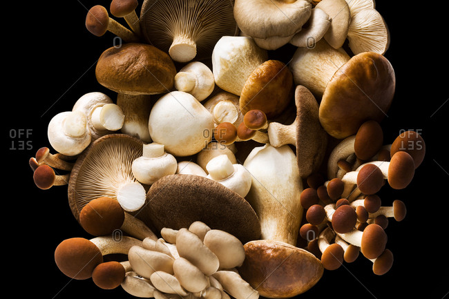 Freshly picked natural organic edible mushrooms isolated on a black background, copy space. Vegetarian concept.