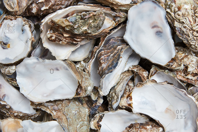 Beautiful background of many empty oyster shells. Creative layout for your ideas. Top view