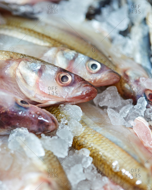 Closeup of raw frozen smelt fish on ice in a fish shop. Ingredient for a healthy diet. Top view