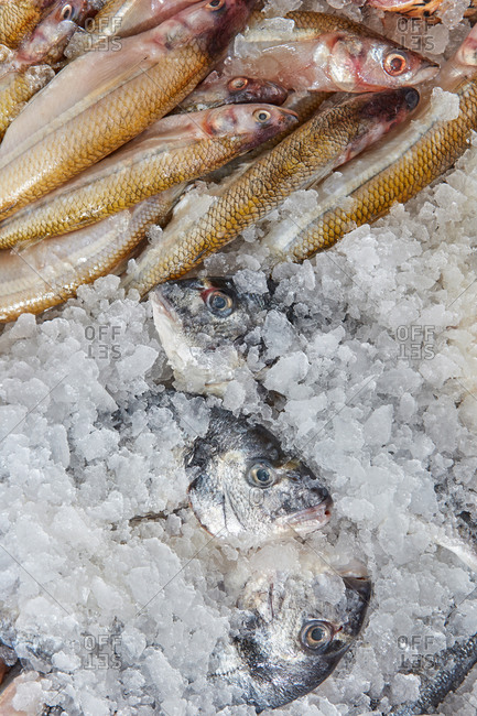 Raw fresh fish dorado and smelt presented on ice. Business concept, selling fish in a seafood shop . Top view