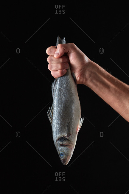 Fresh raw sea bass fish in a man's hand on a black background with space for text. Healthy Diet Seafood