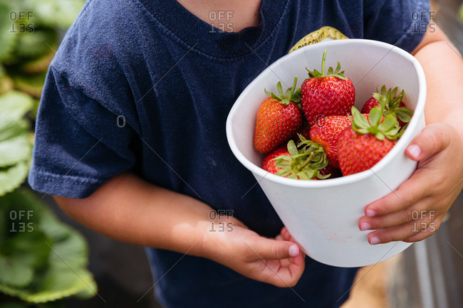 Toddler child holding a bucket of fresh red strawberries picked from a garden