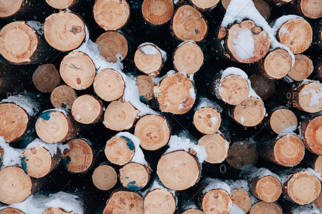 Snow falling over a stack of fresh cut logs