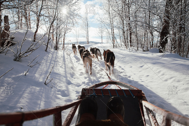 Person riding in a sled being pulled by sled dogs