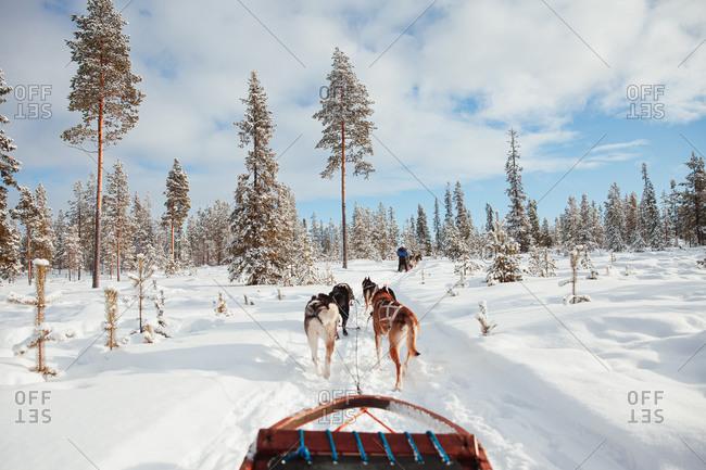 Dog sledding through rural Finland in winter