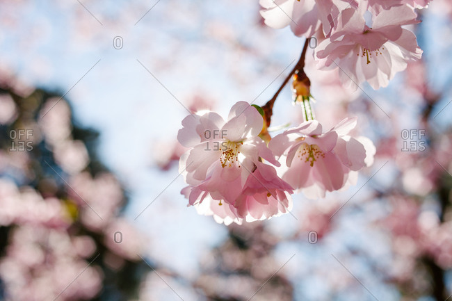 Close up of flower blossoms on a tree