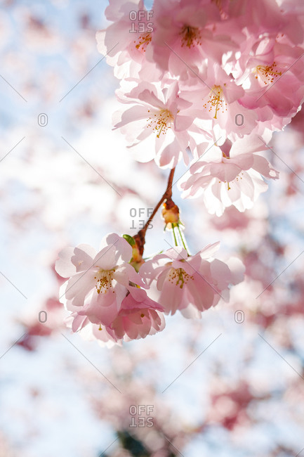 Close up of flowers blossoming on a tree