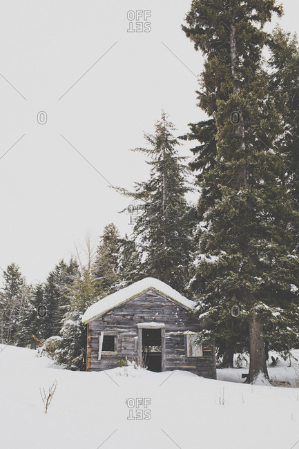 Snow covered old wooden trappers cabin in the forest.