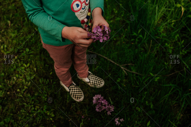 Faceless image of young girl playing with purple flowers