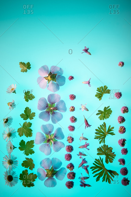 Flowers and leaves arranged on a blue background