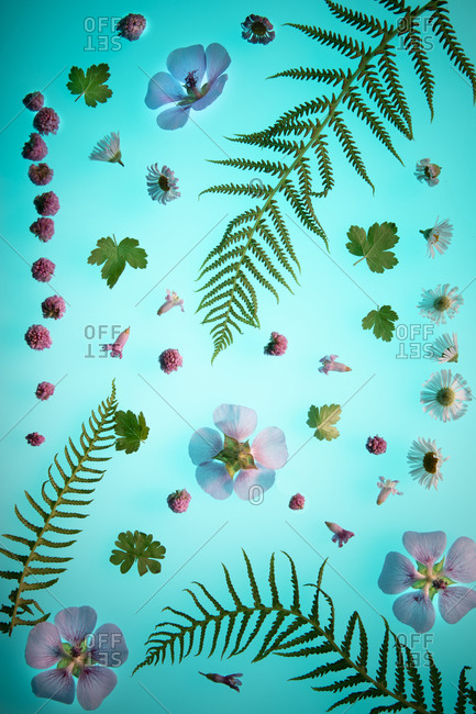 Flowers and fern leaves arranged on a blue background
