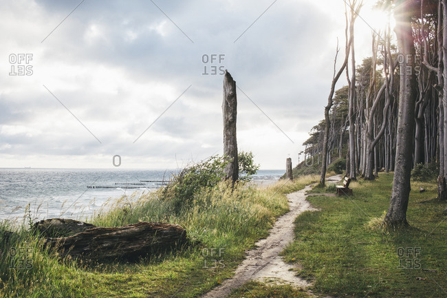 Germany- Nienhagen- view to the sea and Gespensterwald
