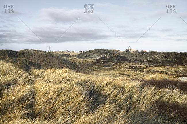 Denmark- Henne Strand- Dune landscape