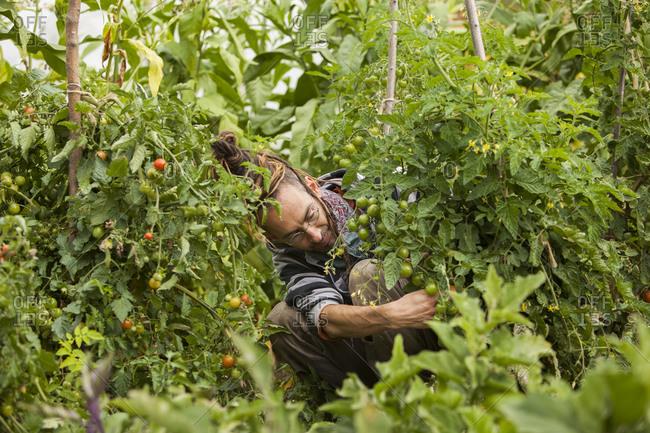 Austria- Schiltern- Alternative gardener at work