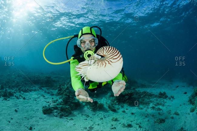 Oceania- Palau- Diver watching Palau nautilus- Nautilus belauensis- in Pacific Ocean