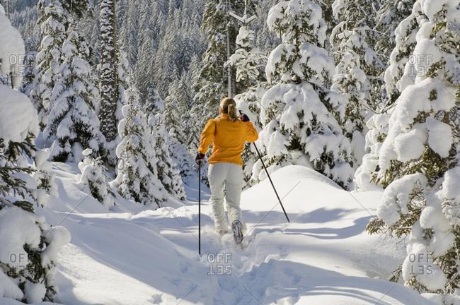 Austria- Salzburger Land- Altenmarkt-Zauchensee-   Young woman cross-country skiing- rear view