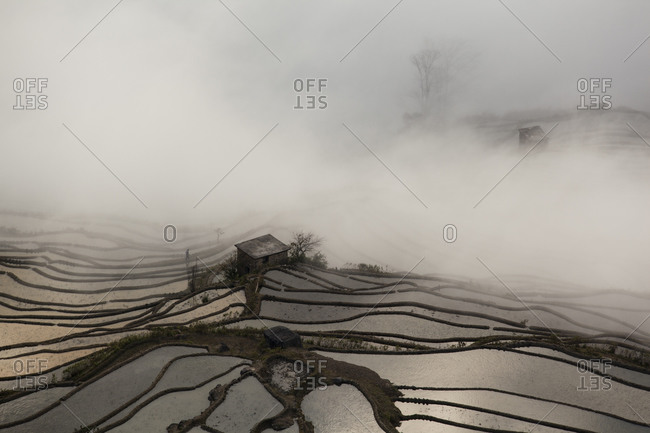 China- Yunnan- Yuanyang- Overcast rice terraces