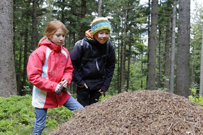 Germany- Bavaria- Lower Bavaria- Bavarian Forest- Deggendorf- Dreitannenriegel near Grafling- two children watching anthill