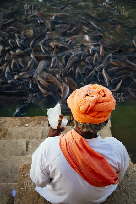 India- Jaisalmer- Abundance of catfish in Gadisar Lake