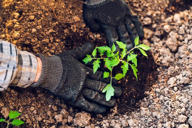 Anonymous gardener digging soil with trowel in garden