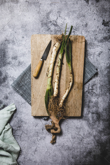 Top view of bunch of ripe dirty calsot onion placed on tray and linen cloth on wooden table near knife in Catalonia, Spain