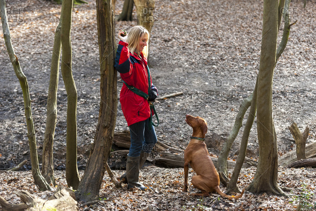 A woman takes her Vizsla for a walk in Putney Heath