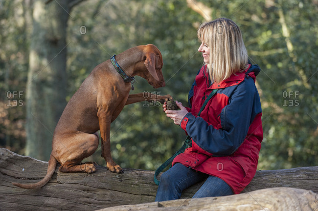 Blonde woman playing with her Vizsla in Putney Heath