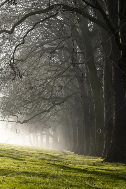 Hackney Downs in London on a misty winter morning
