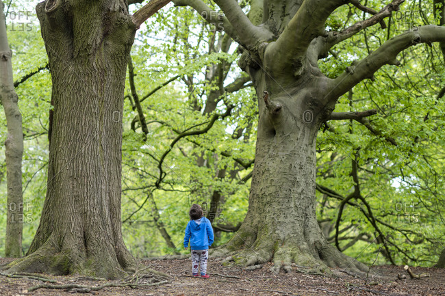 Rear view of a toddler playing in the woods at Hampstead Heath in London