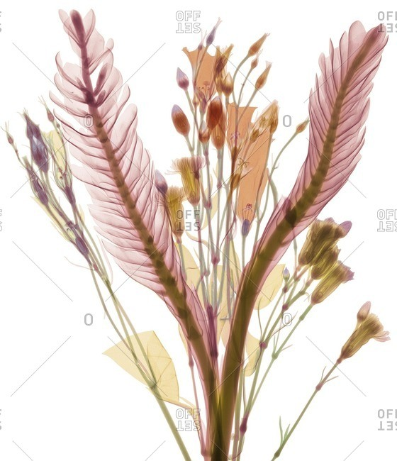 Long leaves and pastel flower buds, colored X-ray.