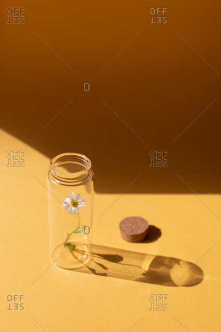 A single daisy flower in a glass jar on yellow background